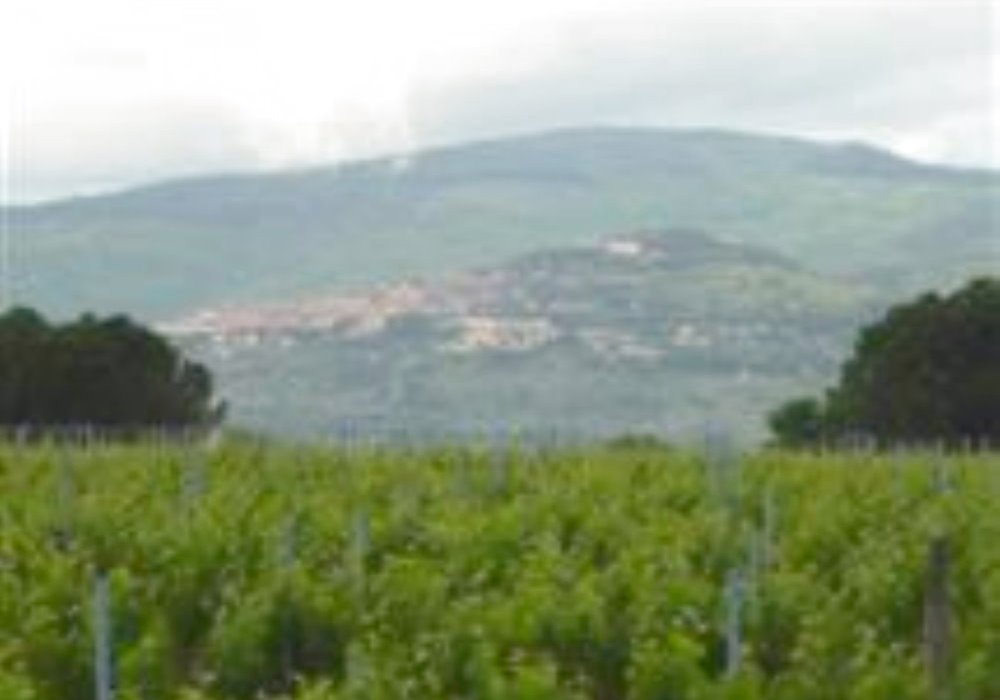 VINI DOC  Cortona Toscana